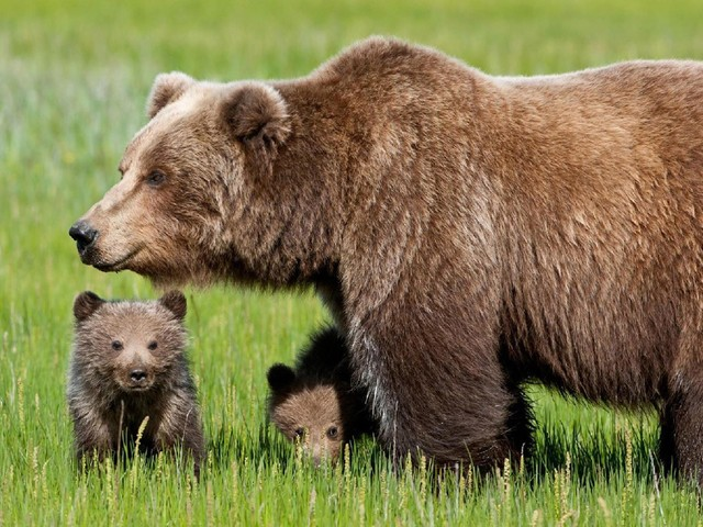 A processo per le minacce al leader animalista Rizzi