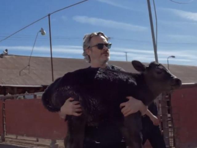 Joaquin Phoenix salva un vitellino e la sua mamma dal macello
