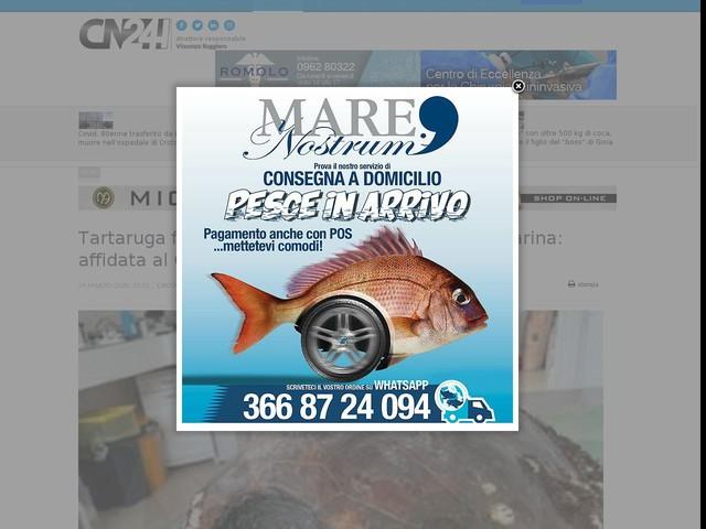 Tartaruga ferita ritrovata sulla spiaggia di Cirò Marina: affidata al CTRM di Caporizzuto