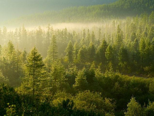 Come abbattere la CO2 proteggendo le foreste