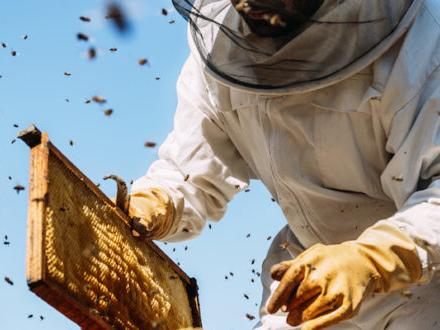 Polline e pappa reale: perché non c'è il paese di origine? Risponde l'esperto in prodotti delle api