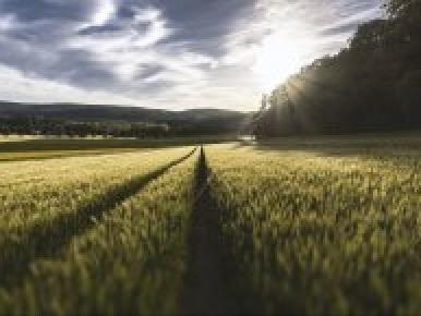 I cambiamenti climatici potrebbero rendere impossibile coltivare il sud della Gran Bretagna