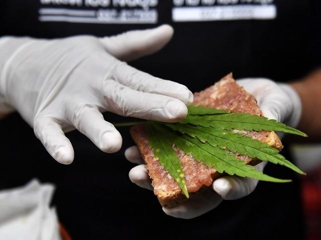 Cannabis, raggiunte le 500 mila firme per il referendum