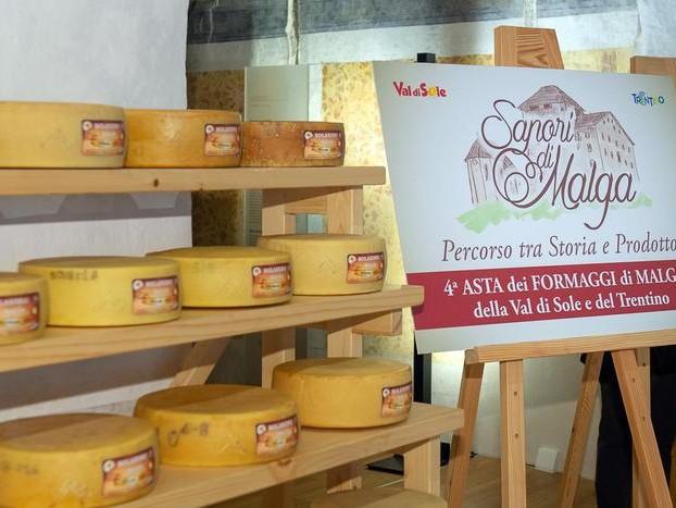 All'asta i migliori formaggi delle malghe della Val di Sole