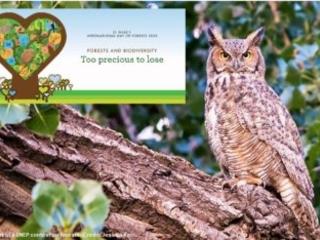 Foreste e biodiversità: troppo preziose per perderle (VIDEO)