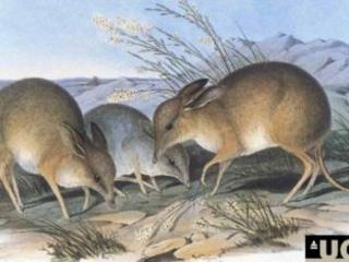 Estinzione delle specie: un nuovo target per un piano globale di salvataggio della natura