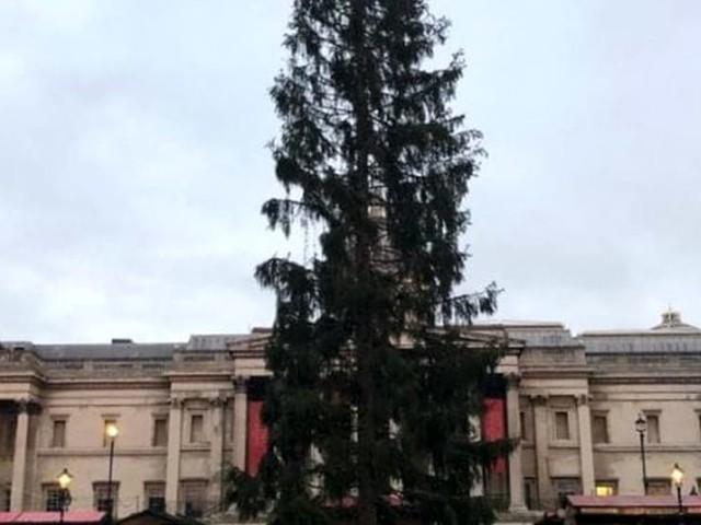 """Spelacchio in versione inglese, critiche per l'albero di Natale di Londra: """"E' triste"""""""