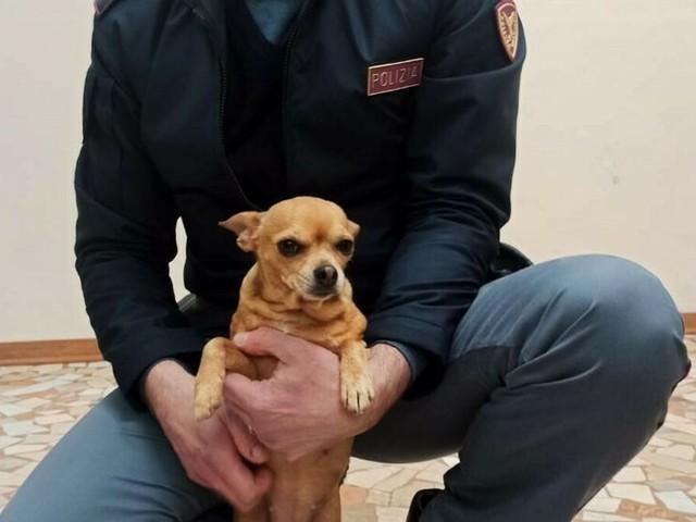 Un 'insolito viaggiatore': la Polizia soccorre un cagnolino trovato su un treno