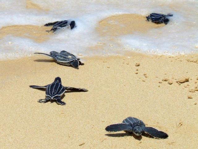 In Sudafrica trovate le tracce fossili di piccole tartarughe marine