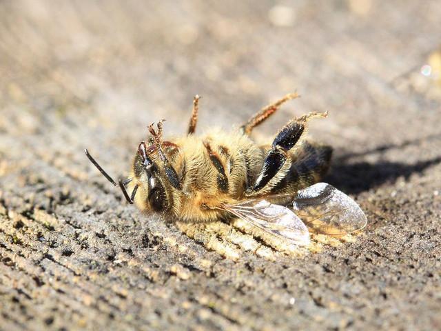 Pesticidi: i Paesi membri della UE possono vietarli senza autorizzazione