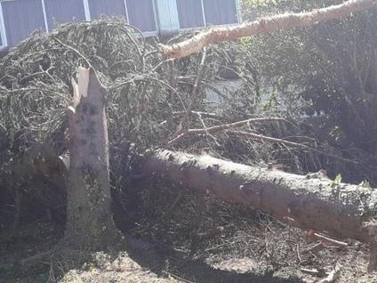 Gli alberi delle scuole di Varese distrutti dal nubifragio