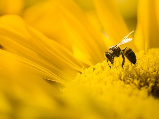 Nella Giornata mondiale delle api l'Italia si ritrova senza miele