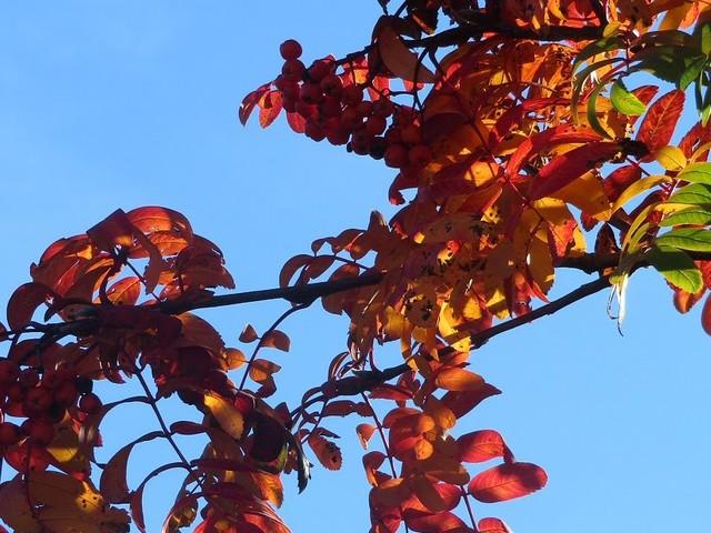 In treno all'estero: Losanna (Svizzera) tra i colori dell'autunno, vino e fonduta