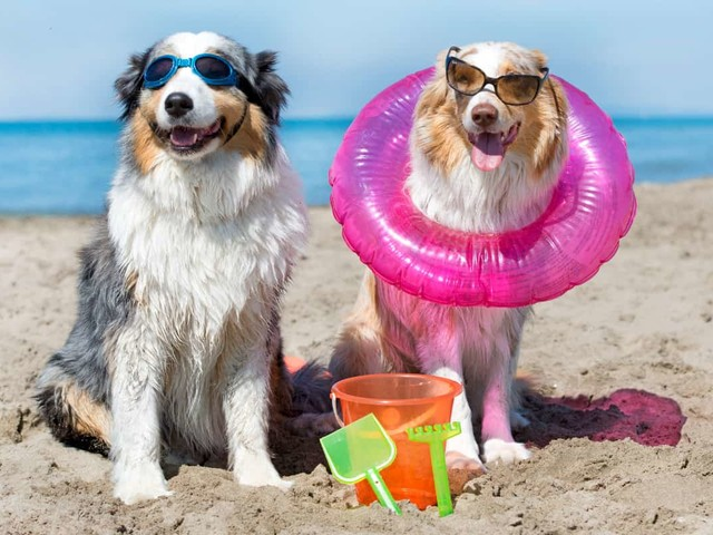 Spiagge per cani: dove andare questa estate in Italia