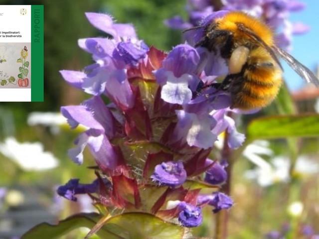 Impollinatori: il 9% di api e farfalle italiane è a rischio estinzione