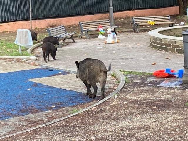 Roma, cinghiali uccisi dalla polizia in un parco giochi: la protesta degli animalisti