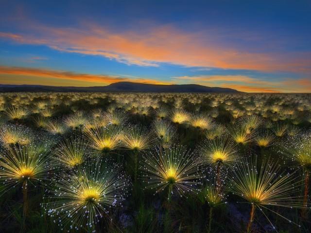 I giardini più belli del mondo: premiate le foto più spettacolari