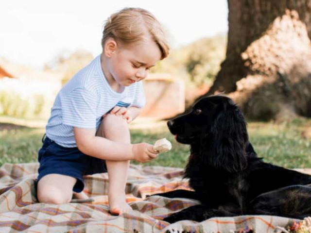 Lutto per Kate e William: è morto il cane Lupo