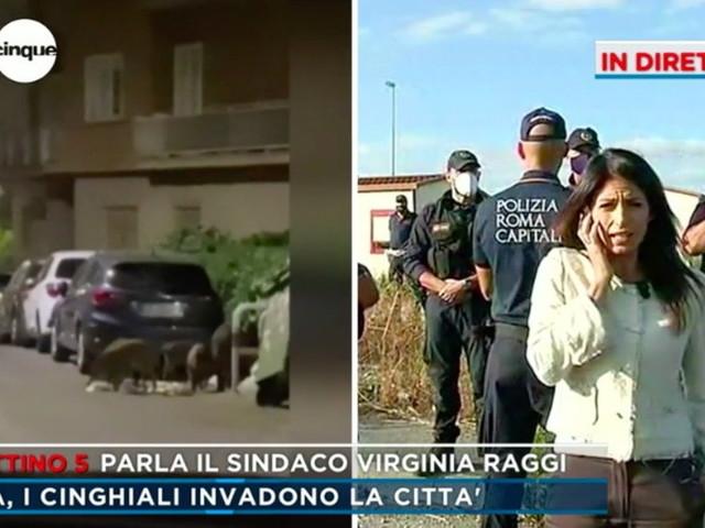 """Cinghiali a Roma, Virginia Raggi: """"Ho fatto un esposto contro la regione, era di loro competenza"""""""