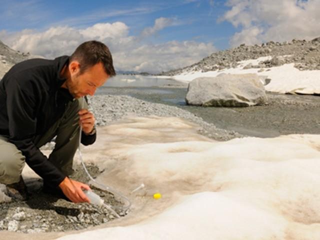 Pesticidi della Pianura Padana nei ghiacciai delle Alpi: a rischio la vita degli insetti