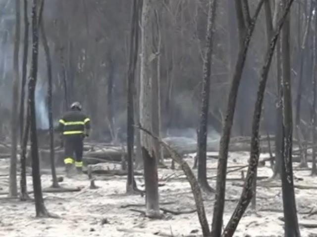 Pescara, le immagini dalla pineta Dannunziana devastata dagli incendi