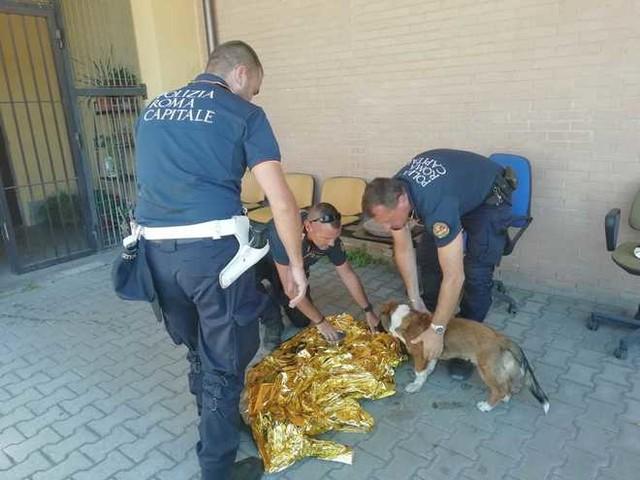 Si lancia tra le auto trascinando un cucciolo al guinzaglio: ragazzo e cagnolino salvati dalla Polizia Locale