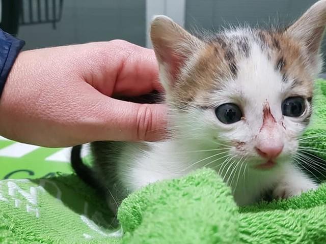 Gattine incastrate in un canale nel porto di Ortona, salvate da Lida e vigili del fuoco: ora cercano casa