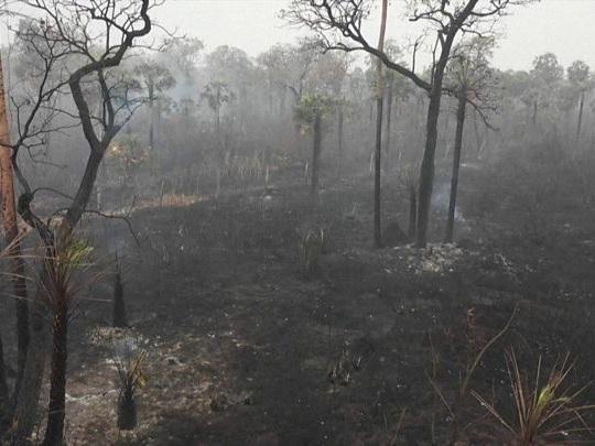 """Bolivia, quando gli incendi in Amazzonia sono """"socialisti"""""""