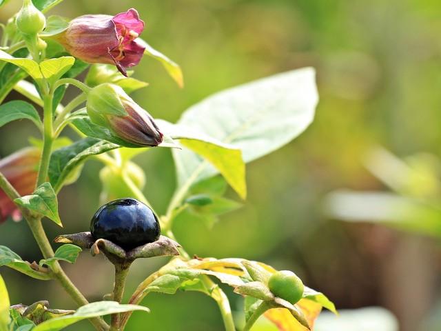 """Si sono """"ristrette"""" le piante Già estinte oltre 600 specie"""