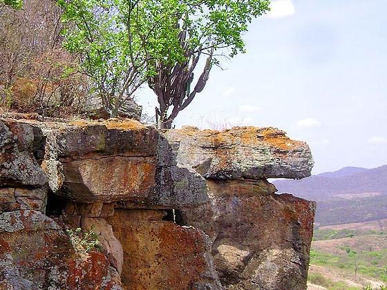 La Caatinga Brasiliana