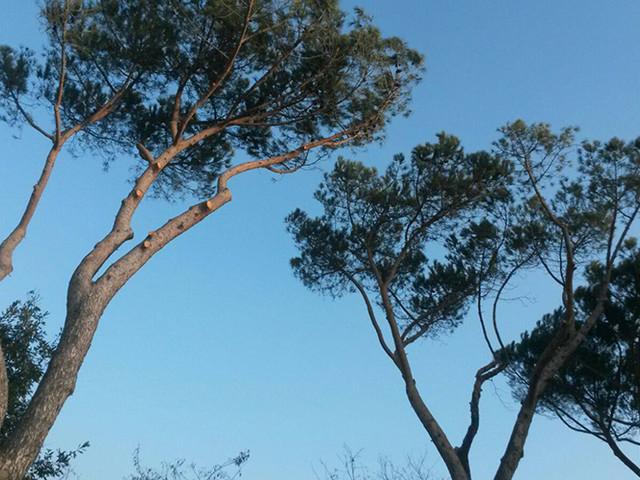 Roma, albero caduto a Prati: ancora chiuso tratto via Oslavia