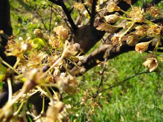 Allarme agricoltura: basso mantovano in fumo il 70% dei raccolti a causa del freddo