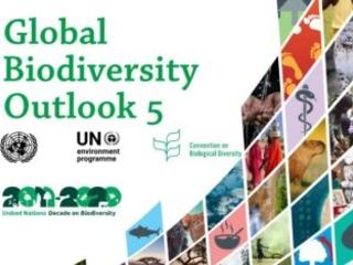 Biodiversità: l'umanità è a un bivio (VIDEO)