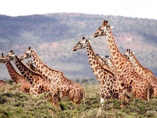 Economia della fauna selvatica: leadership africana per la conservazione della biodiversità
