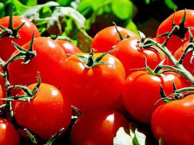I 9 vantaggi del consumo di pomodoro
