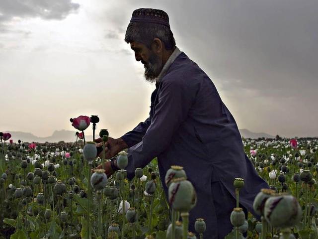 Spaccio globale: sulle nuove vie della droga