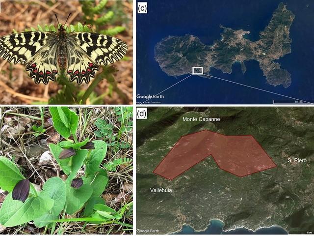 Farfalle in via di estinzione, rovi e canneti all'Isola d'Elba