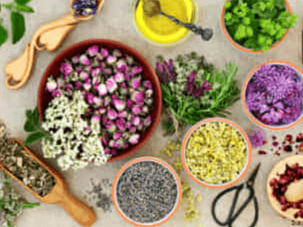 Dieta con le erbe, piante e fiori