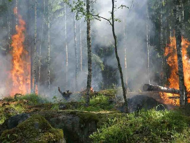 La soia che minaccia foreste e diritti umani in Brasile sta arrivando in Europa. Ecco come