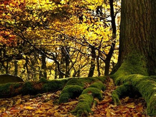Un albero per il clima, da domani la Festa dell'albero di Legambiente