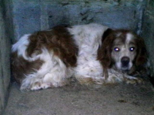 Cane sopravvive da solo in un garage per 9 anni prima di trovare l'amore
