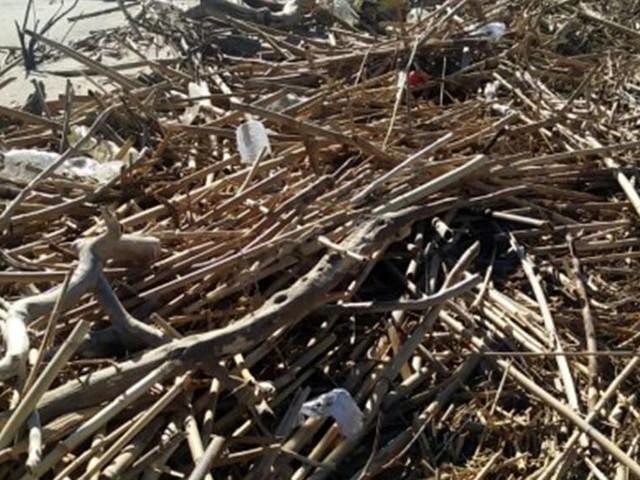 Legambiente Catania ripulisce la foce del fiume Simeto