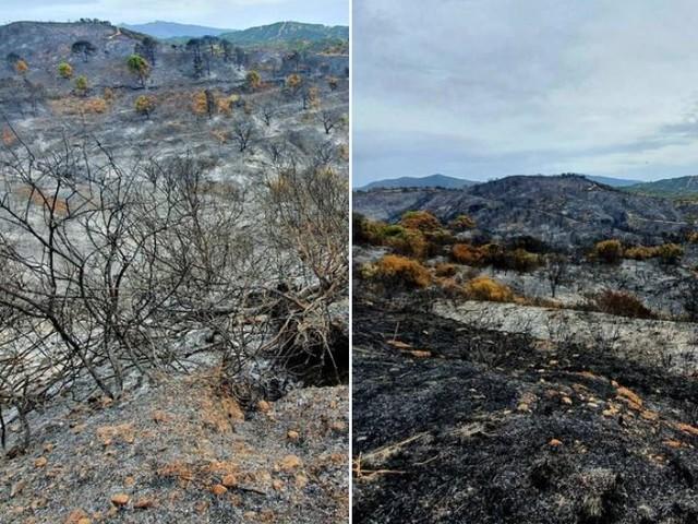 """Incendio """"devastante"""" in Spagna: il rogo nella Sierra Bermeja è ancora fuori controllo, distrutti 7.400 ettari"""