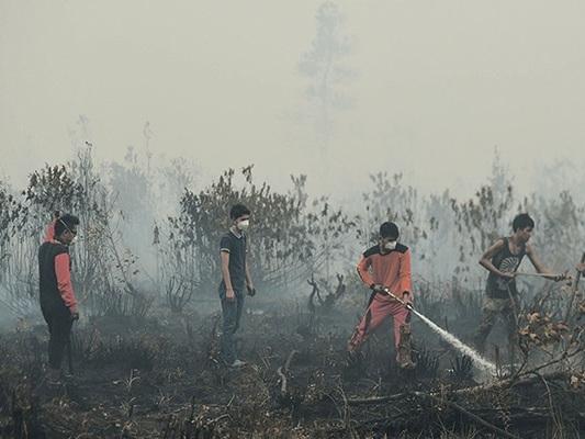 Non solo l'Amazzonia, gli incendi stanno devastando anche l'Indonesia e nessuno ne parla