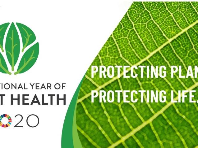 Proteggere le piante è proteggere la vita. La Fao lancia l'International year of plant health 2020 (VIDEO)
