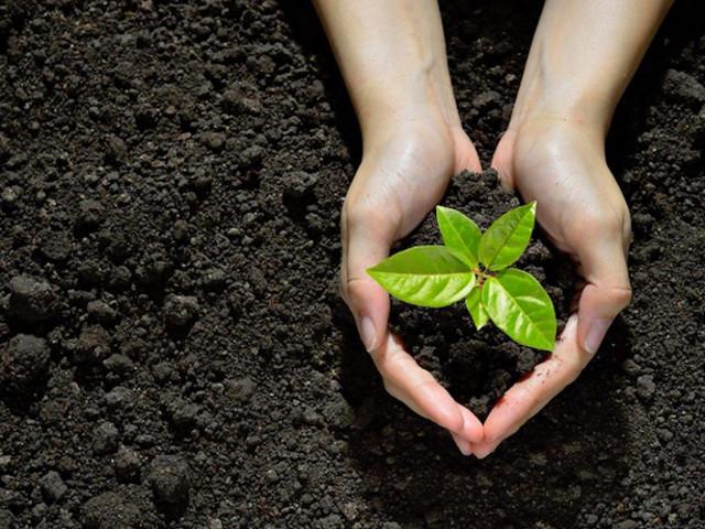 """Clima. """"Un albero in più"""": appello per piantare in Italia 60 milioni di alberi"""