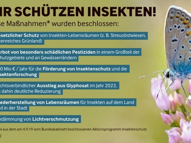 La Germania stanzierà 100 milioni di euro per un piano per la protezione degli insetti