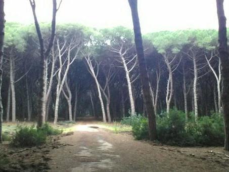 Maltempo, tromba d'aria devasta la Feniglia: 1000 pini distrutti