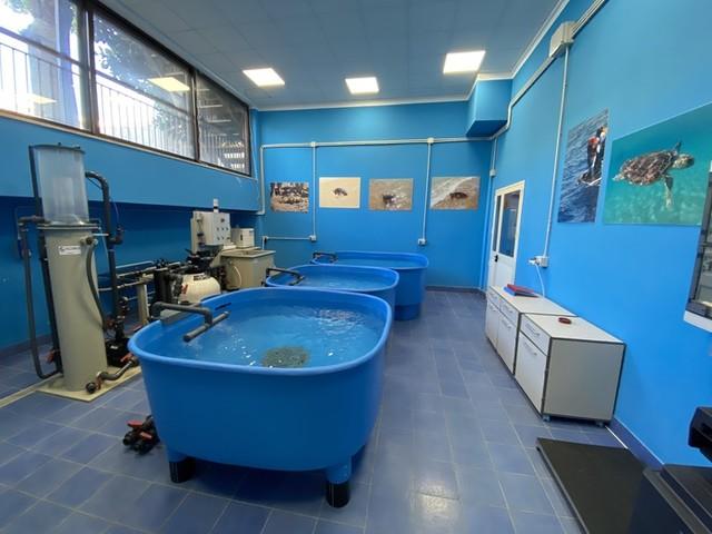 Ambiente: centro recupero tartarughe marine apre alle visite