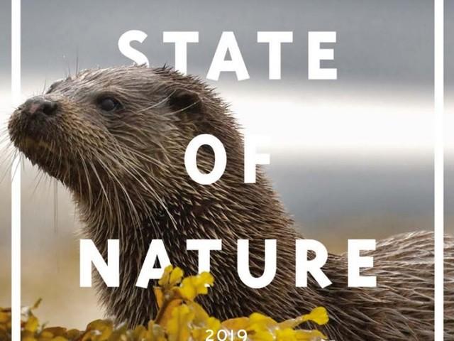 In Gran Bretagna sono in via di estinzione più di un quarto dei mammiferi